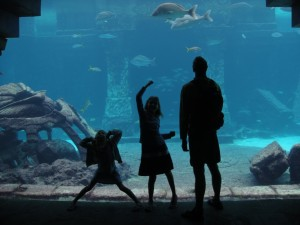 Oversized acrylic windows provide a glimpse into the world's largest open-air aquarium at Atlantis, where more than 250 species of fish mingle with statues and ruins of Plato's mythical lost city.